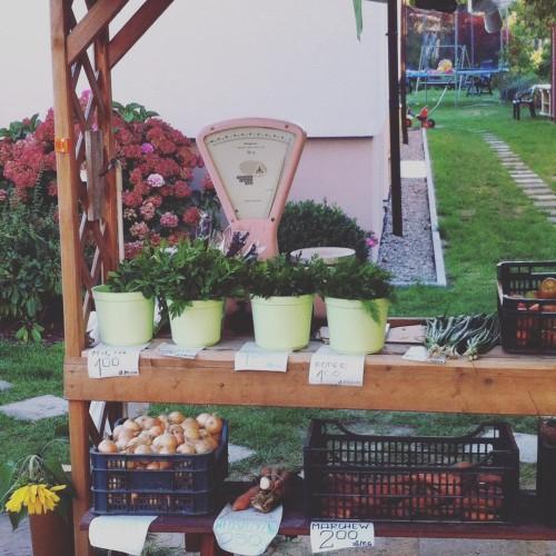 Lokalnie autumn kobylanka jesien zlotapolskajesien vegetables vegan glutenfree delicious beauty